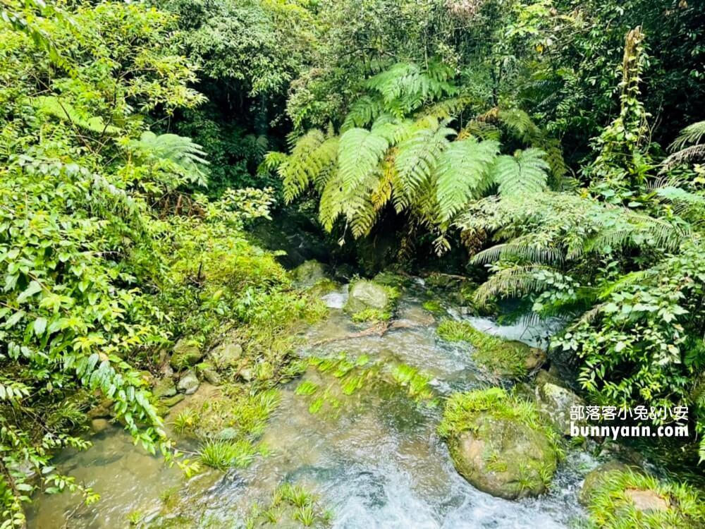 桃園景點》來回半小時!三民蝙蝠洞,秘境版山澗瀑布,復興森呼吸之旅