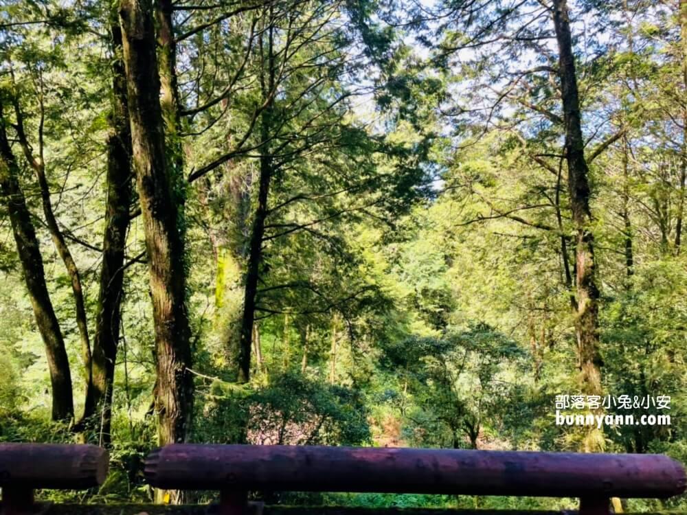 阿里山國家森林遊樂區,搭小火車探訪神木群,巨木森林棧道美如仙境
