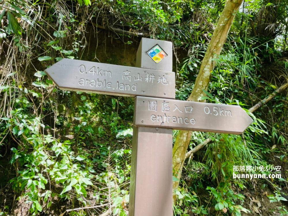 達娜伊谷自然生態公園,美拍貓頭鷹吊橋與部落風情,探訪忘憂秘境