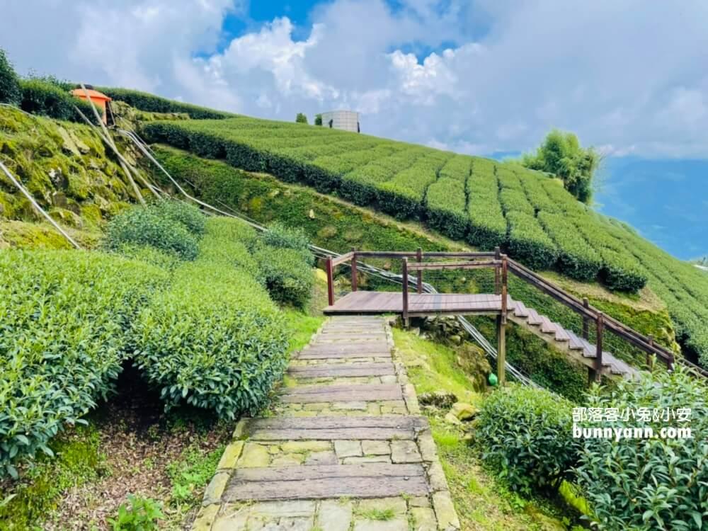 石棹步道群霞之道,15分鐘輕鬆漫步茶田,眺望雲霧飄渺山嵐