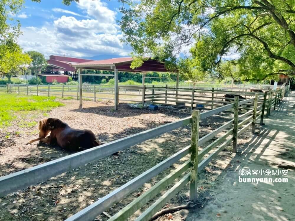 花蓮瑞穗吉蒸牧場,免門票餵小動物吃草好地方,沒有臭味的牧場